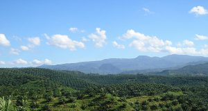 A palm oil plantation in Indonesia